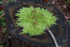 FlowerlessPlant Royalty Free Stock Image