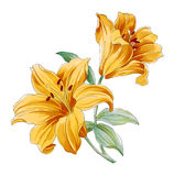 Flower,lily Royalty Free Stock Photo