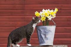 Flowerlover royalty-vrije stock foto