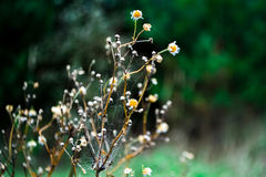 Flowernature Royalty-vrije Stock Foto