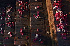 FlowerPetals on Steps Royalty Free Stock Images