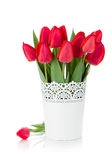 flowerpot ανασκόπησης απομόνωσε το κόκκινο λευκό τουλιπών Στοκ φωτογραφίες με δικαίωμα ελεύθερης χρήσης