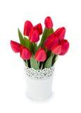 flowerpot ανασκόπησης απομόνωσε το κόκκινο λευκό τουλιπών Στοκ φωτογραφία με δικαίωμα ελεύθερης χρήσης