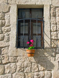 Flowerpot κάτω από το παράθυρο Στοκ Φωτογραφία