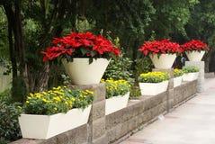 flowerpot κόκκινο φυτών φύλλων Στοκ Εικόνες