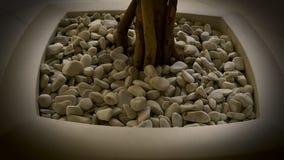 Flowerpot με τους μικρούς βράχους και το δέντρο στοκ εικόνες