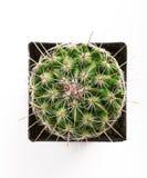 flowerpot кактуса spiny Стоковое фото RF