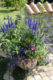 Flowerpot. With Salvia farinacea, Osteospermum ecklonis, Petunia, Euphorbia hypericifolia Diamond Frost Stock Photo