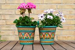 Flowerpot Stock Photos