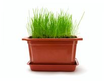 Flowerpot. Isolated flowerpot with green grass stock images
