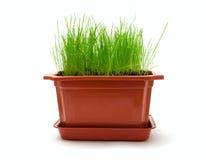 Flowerpot Stock Images