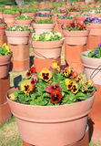 Group of Flowerpots Royalty Free Stock Photo