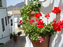 Flowerpots in Zahara de la Siera, Spain Stock Images