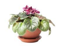 flowerpot Obrazy Stock