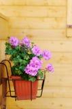Flowerpot Stock Image