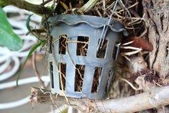 flowerpot Royalty-vrije Stock Afbeelding