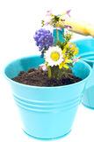 Flowerpot Royalty Free Stock Photos
