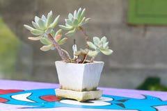 Flowerpot2 Images libres de droits