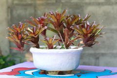 Flowerpot4 Images stock