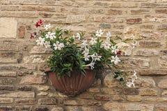 flowerpot Imagem de Stock