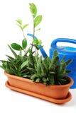 Flowerpot Images libres de droits