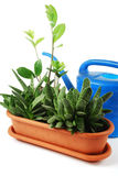 flowerpot Obrazy Royalty Free