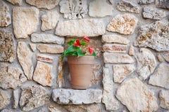 flowerpot στοκ φωτογραφία με δικαίωμα ελεύθερης χρήσης