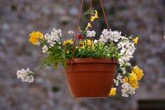 flowerpot Royalty-vrije Stock Foto