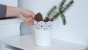 flowerpot video estoque