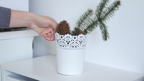 flowerpot απόθεμα βίντεο