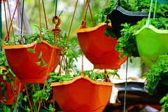 flowerpot στοκ εικόνες με δικαίωμα ελεύθερης χρήσης
