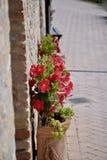 flowerpot Royalty-vrije Stock Afbeeldingen