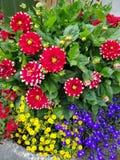 flowerpot Immagine Stock Libera da Diritti