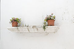 Flowerpot Royalty Free Stock Image