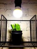 Flowerpot. Beautiful Flowerpot in coffee cafe royalty free stock photo