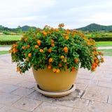 Flowerpot Beautiful Royalty Free Stock Photography