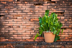 Flowerpot with brick wall background Royalty Free Stock Photos