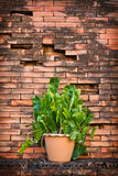 Flowerpot with brick wall background Stock Photos