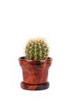 flowerpot brun de cactus Images stock