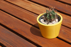 A flowerpot with cactus on the wooden picnic table Royalty Free Stock Image