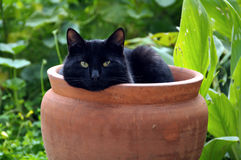 Flowerpot cat Royalty Free Stock Image