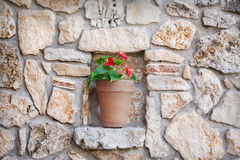 Flowerpot. Close up of flowerpot and wall royalty free stock photo