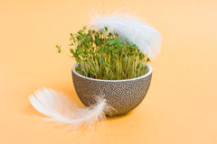 Flowerpot with corn and feathers Royalty Free Stock Image