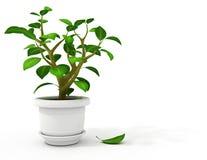 Flowerpot dans le bac blanc Photos libres de droits