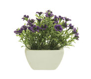 Flowerpot. Decorative Purple Petunia in a flowerpot isolated on white background stock image