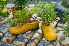 Flowerpot del pattino Fotografie Stock