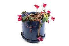 Flowerpot der verwelkten Blumen lizenzfreie stockfotos