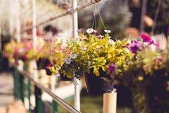 Flowerpot dla valentine zdjęcia stock