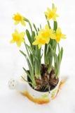 Flowerpot do Daffodil na neve Imagem de Stock Royalty Free