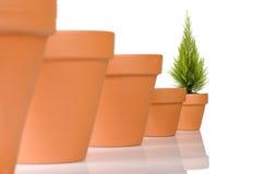Flowerpot em uma fileira Imagens de Stock